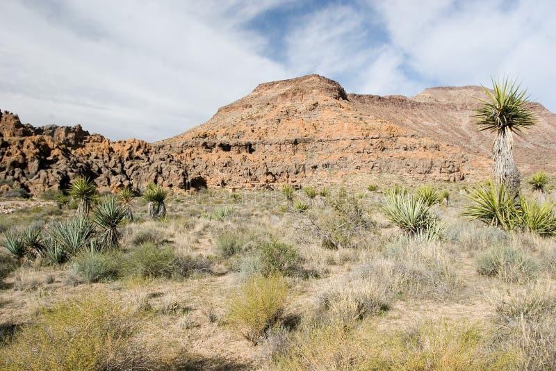 Mojave fotos de stock