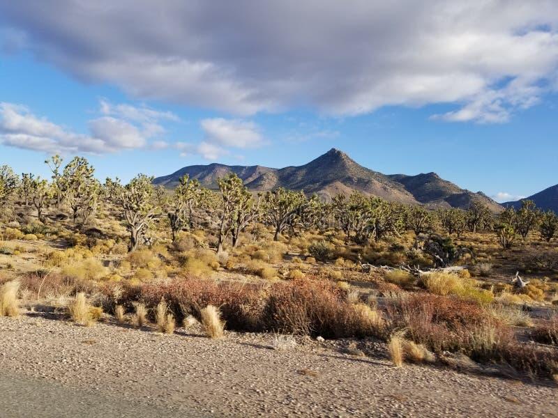 Desert vegetation in December stock image