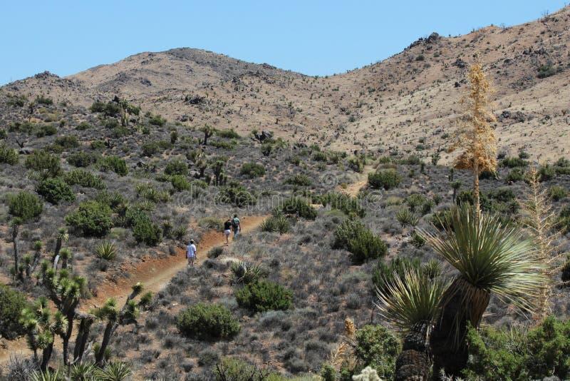 Mojave Desert Landscape. A Mojave desert landscape scene in Joshua Tree National Park. The Mojave desert is important for its unique vegetation royalty free stock photo