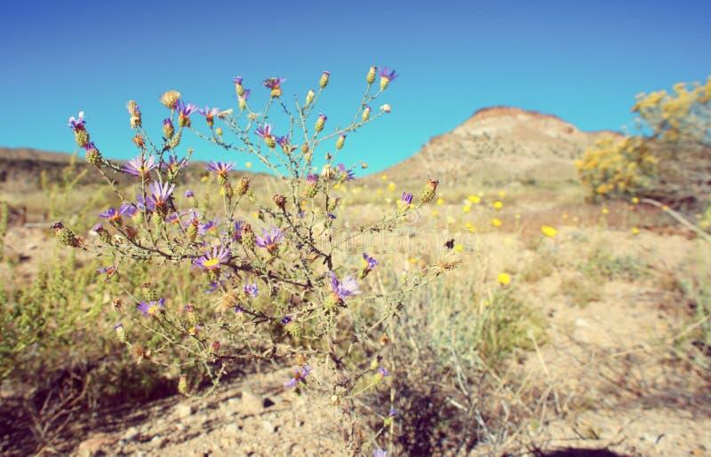Mojave desert landscape. In autumn stock images