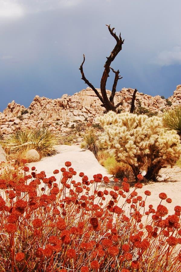 Mojave Desert. Spring in Mojave Desert landscape royalty free stock photos