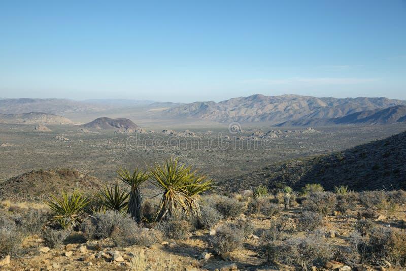 Mojave Desert vista from Ryan Mountain. In Joshua Tree National Park, California, USA stock image