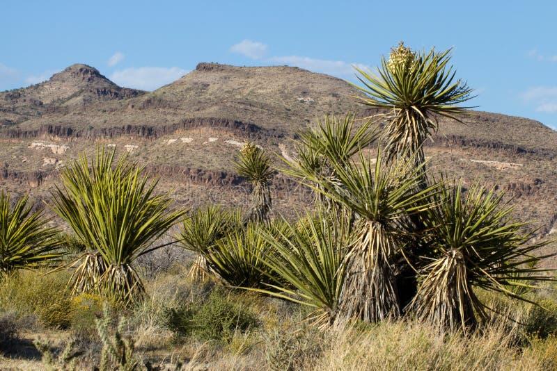 Mojave Krajowa prezerwa zdjęcia royalty free
