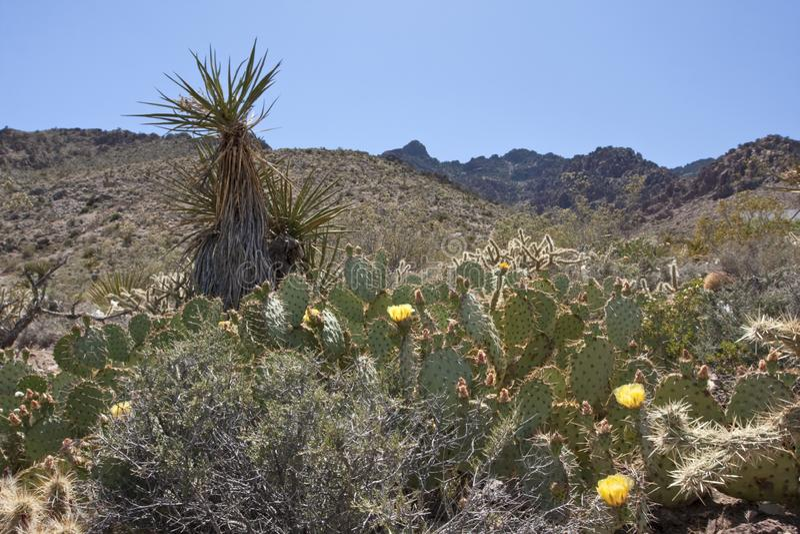 Mojave Woestijn, Mojave Desert. Mojave Woestijn Californie USA, Mojave Desert California USA royalty free stock images
