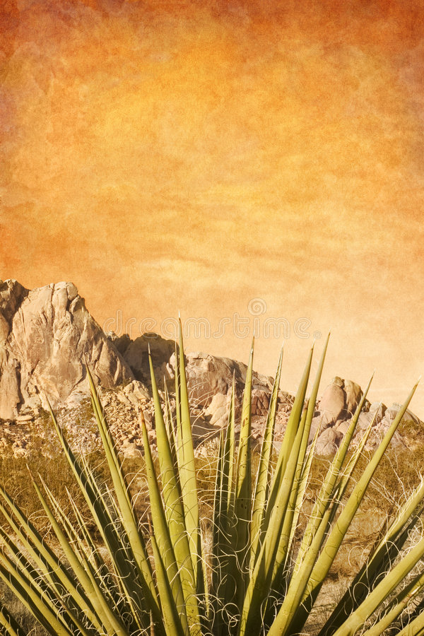 Free Mojave Yucca With Texture Stock Images - 3610524