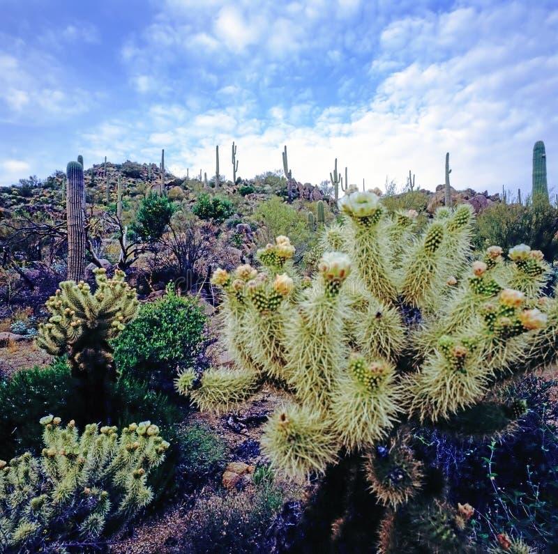 Mojavewoestijn in Californië stock foto's