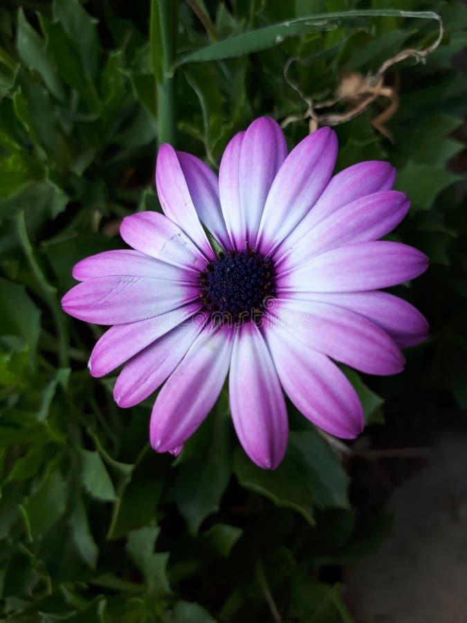 moje kwiaty fotografia stock