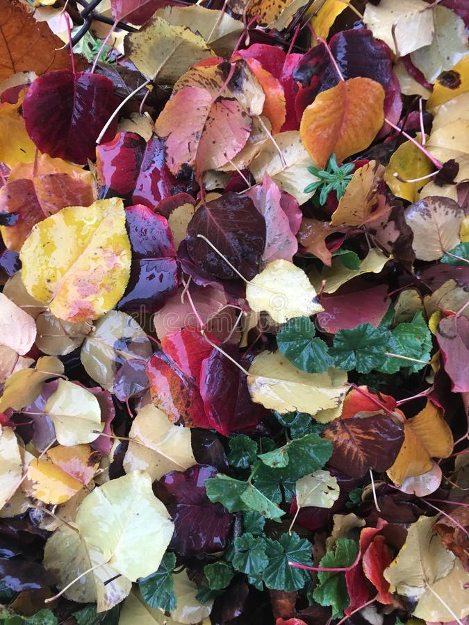 Moje las hojas caidas imagenes de archivo