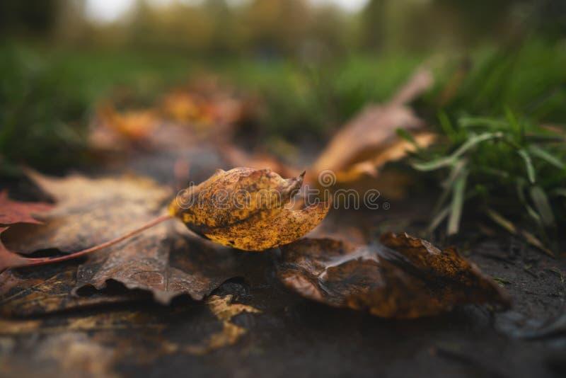 Moje las hojas de otoño caidas en la foto del ángulo bajo del primer de la tierra a mediados de octubre imagen de archivo libre de regalías