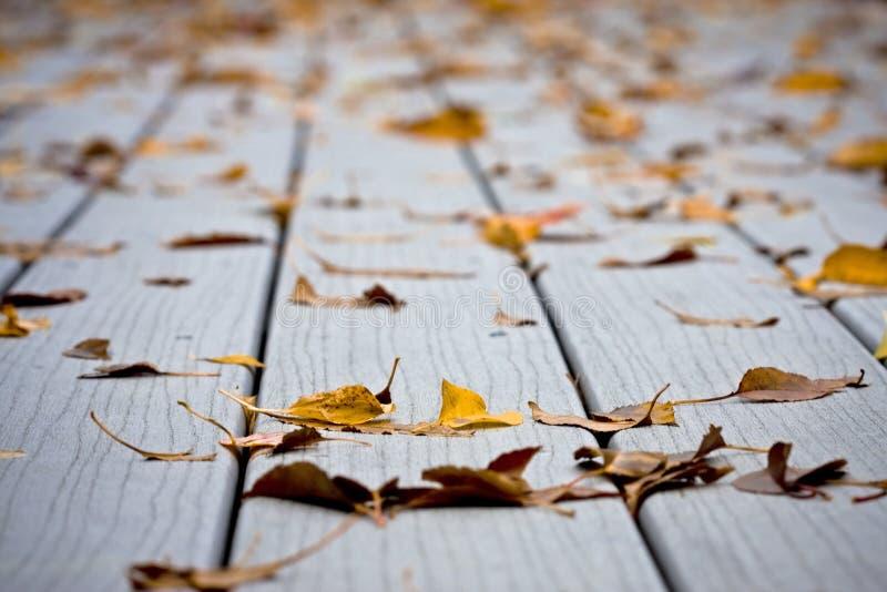 Moje las hojas en decking fotografía de archivo