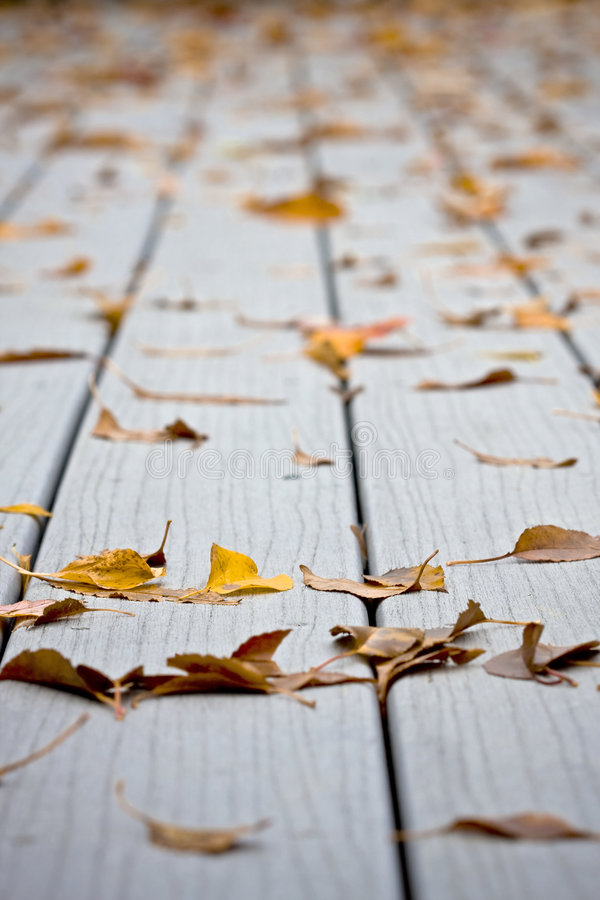 Moje las hojas en decking imagen de archivo libre de regalías