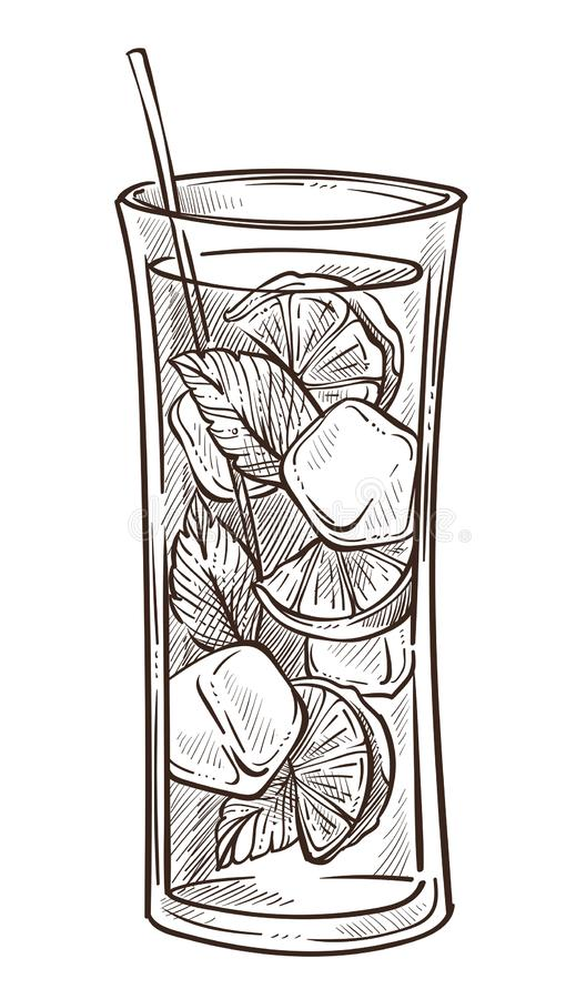 Mojito cocktail in glass isolated sketch lime lemon and mint. Lime lemon and mint mojito cocktail in glass isolated sketch vector fruit slices herb and ice vector illustration