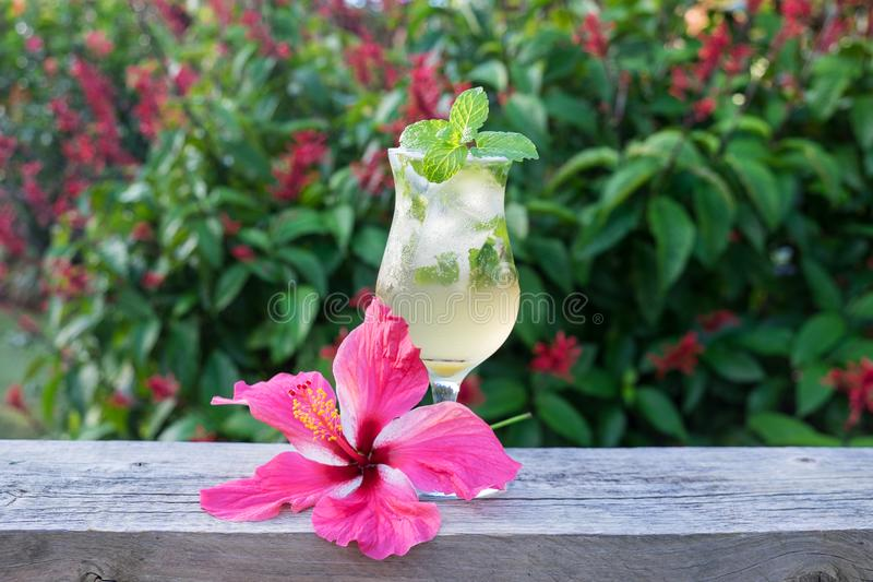 Mojito cocktail in hurricane glass with green mint and pink hibiscus garnish with tropical flowers and garden in background stock images