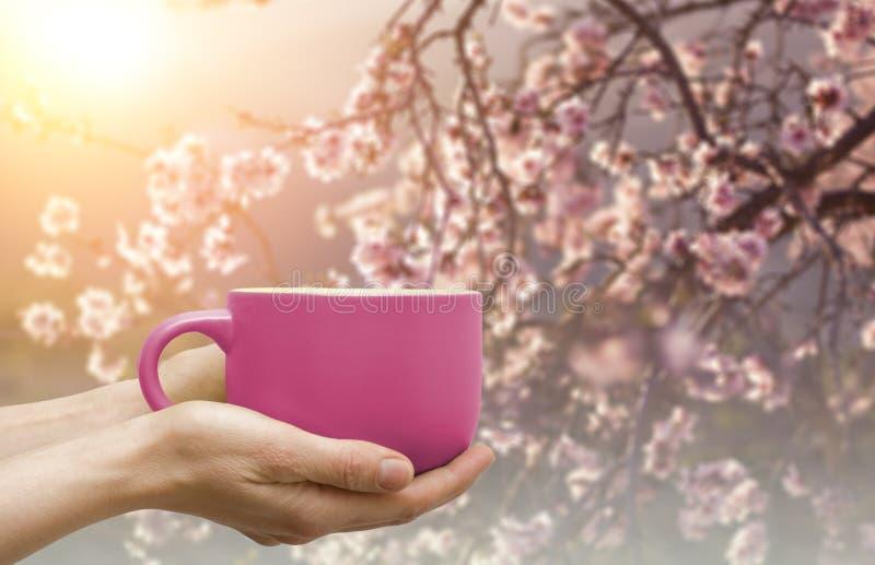 Mok van koffie of T-stuk in de handen met bloesemsakura op backgro royalty-vrije stock afbeelding