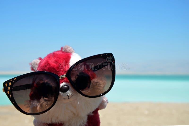 Mokiet zabawka wiewiórka w żeńskich szkłach na pogodnej plaży Nieżywy morze w Izrael obraz stock