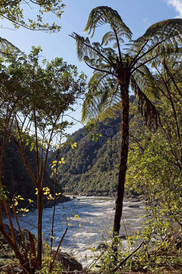 Mokihinui flod som beskådas från den södra banken till och med den infödda busken fotografering för bildbyråer