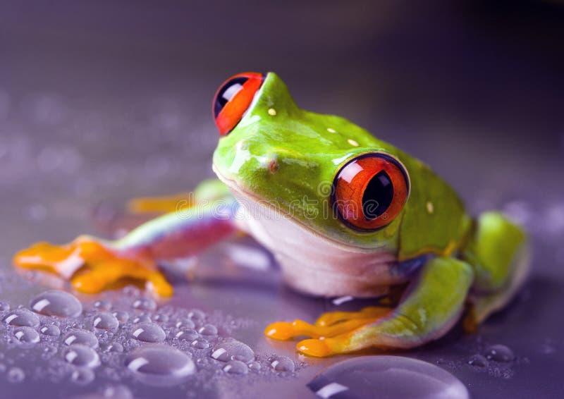 mokra żaba obraz stock