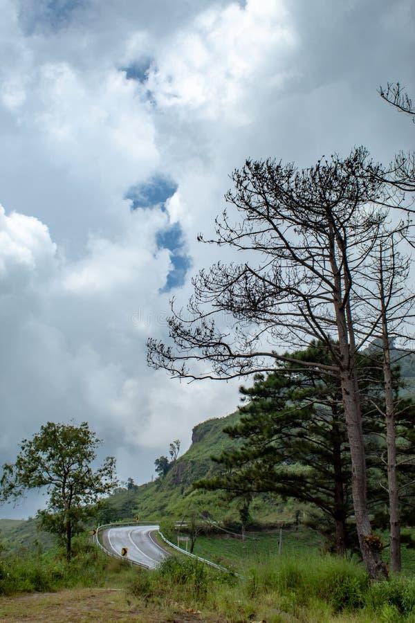 Mokra drogowa deszczówka na drzewach i górze fotografia stock