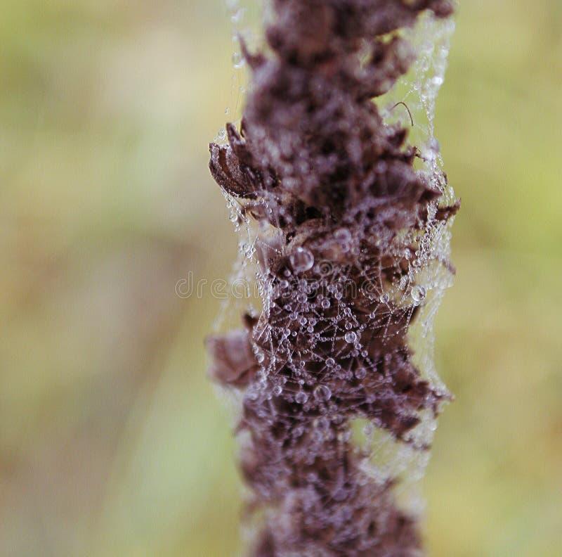 mokra kwiat sieć fotografia stock