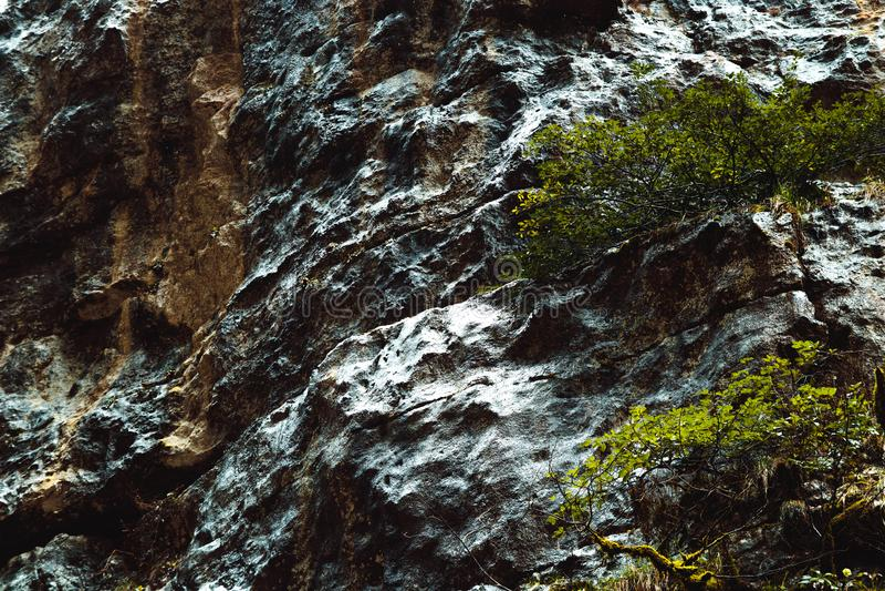 Mokra muscose powierzchnia w górach Abkhazia fotografia stock