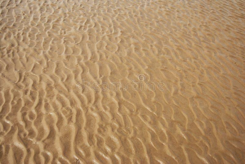 Mokra piasek tekstura Piaskowata plaża dla tła wakacje letni fotografia stock
