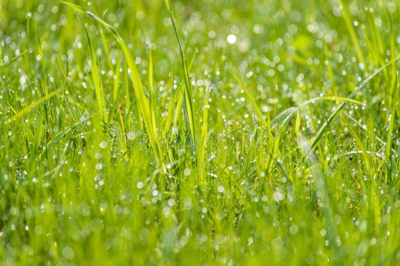 Mokra trawy rosa zamazywał tła światła słonecznego łąkowego bokeh zdjęcia stock