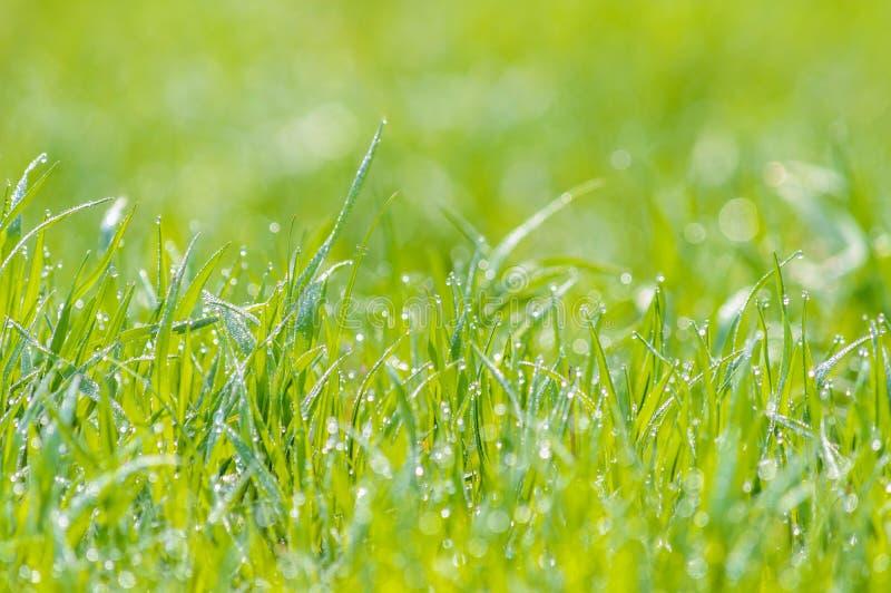 Mokra trawy rosa zamazywał tła światła słonecznego łąkowego bokeh obraz stock