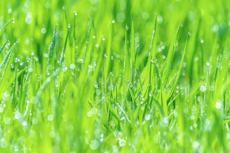 Mokra trawy rosa zamazywał tło luksusowej łąki światła słonecznego bokeh obrazy royalty free