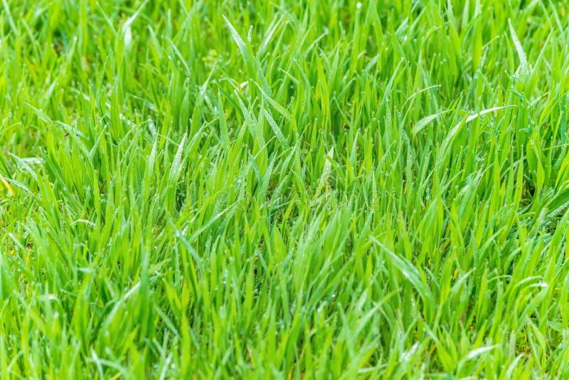 Mokra trawy rosa zamazywał tło luksusowej łąki światło słoneczne obraz stock