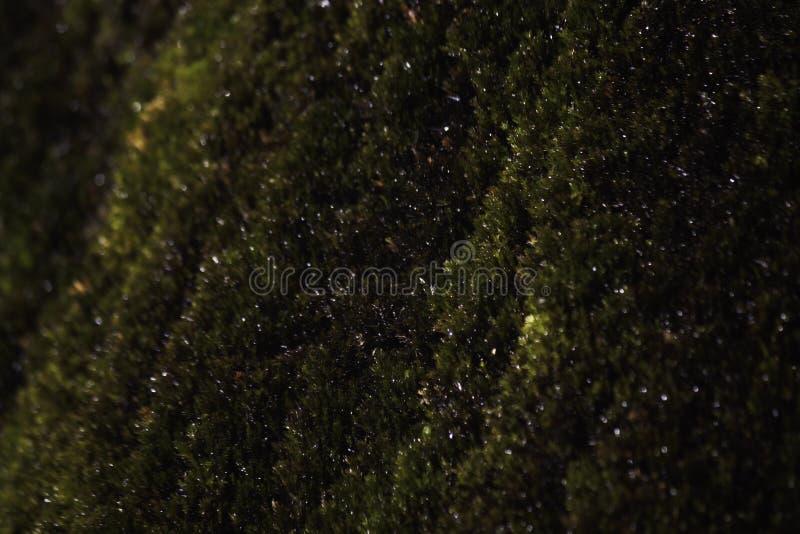 Mokrawy Zielony mech dorośnięcie Blisko siklawy zakończenia obraz royalty free