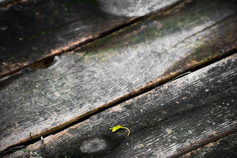 Mokre butwienie deski i mały zielony liść zdjęcie stock