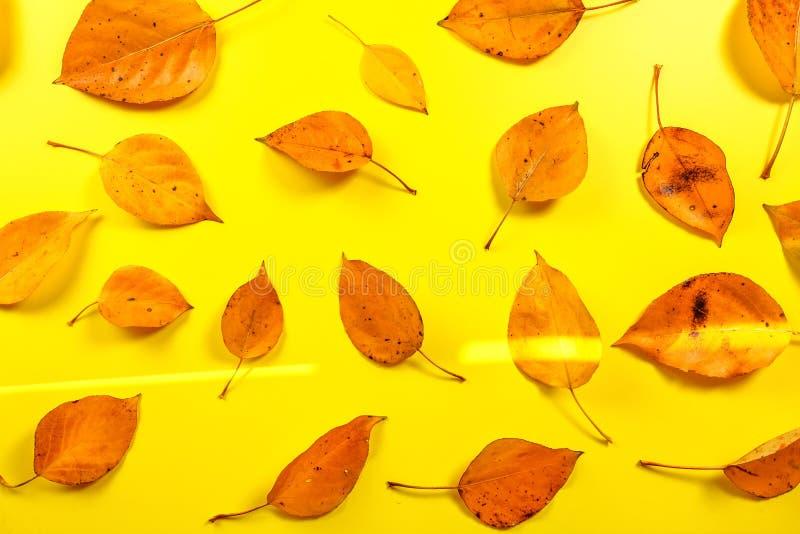 Mokrej jesieni pomarańczowi liście na kolor żółty desce, słońce błyszczą dalej z góry, widok obraz stock