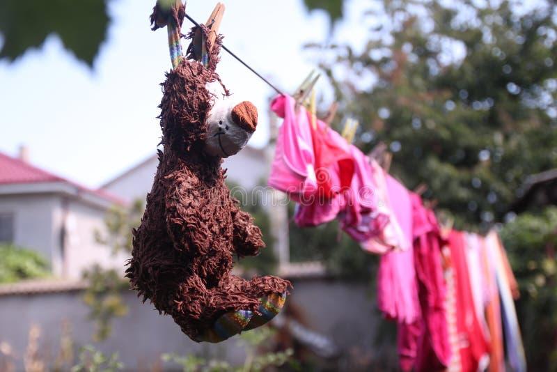 Mokry brąz myjący niedźwiadkowy czekanie fotografia royalty free
