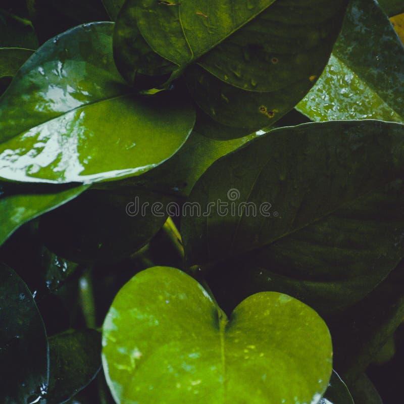 mokrzy zmrok liście zdjęcia royalty free