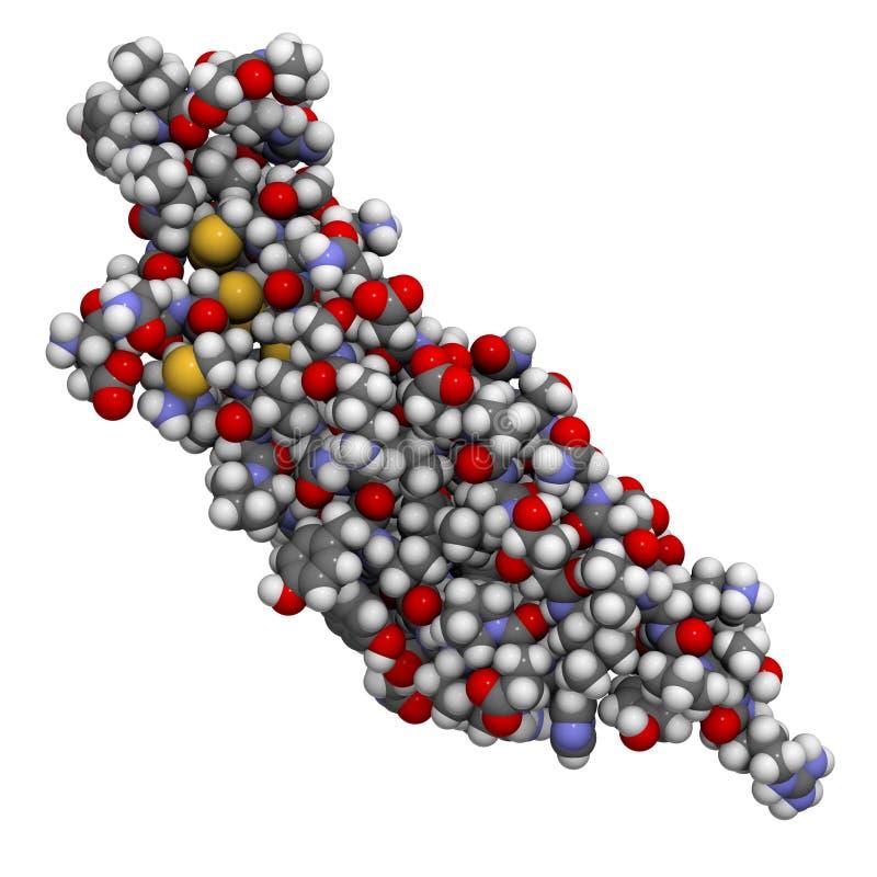 Molécula beta del factor de crecimiento de transformación (TGFB) ilustración del vector