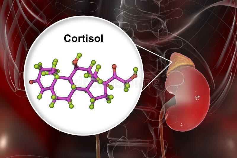Molécula da hormona do cortisol e da glândula ad-renal ilustração royalty free