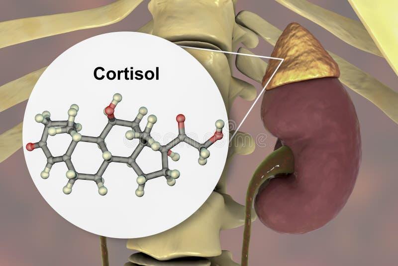 Molécula da hormona do cortisol e da glândula ad-renal ilustração do vetor