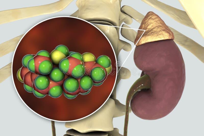 Molécula da hormona do cortisol e da glândula ad-renal ilustração stock
