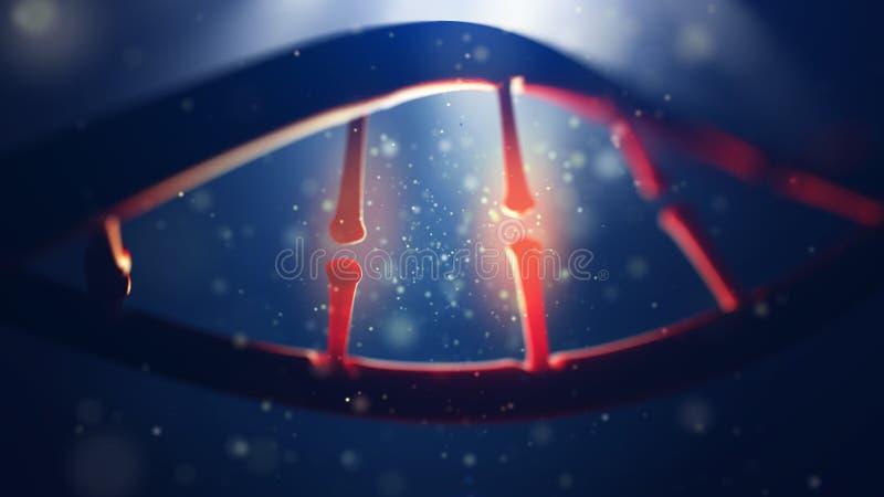 Molécula de la DNA Primer del genoma humano del concepto imagenes de archivo
