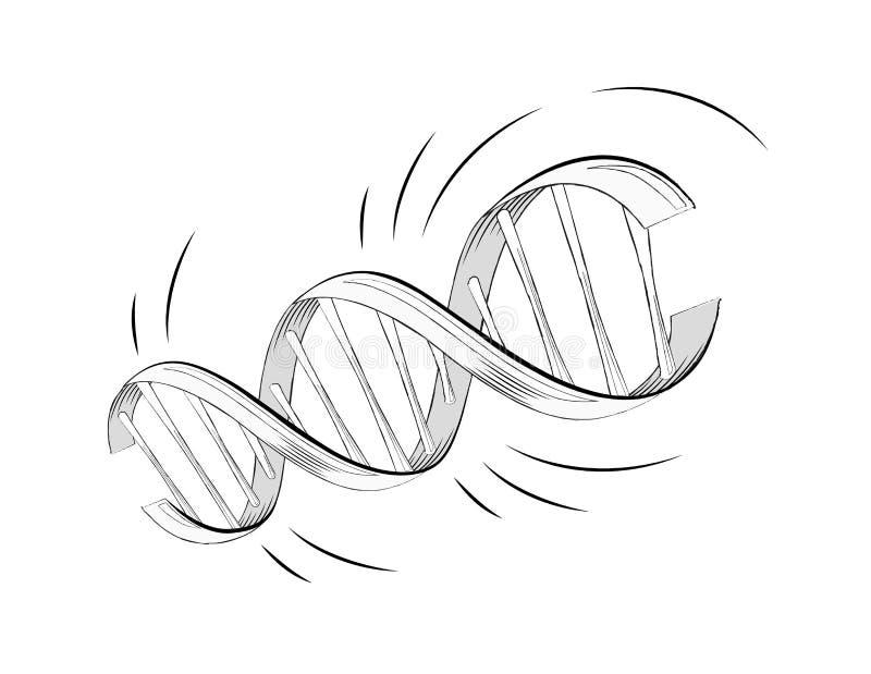Molécula realística da hélice do ADN do vetor com genes ilustração do vetor