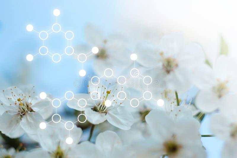 Moléculas en un fondo de flores y de plantas imagen de archivo libre de regalías
