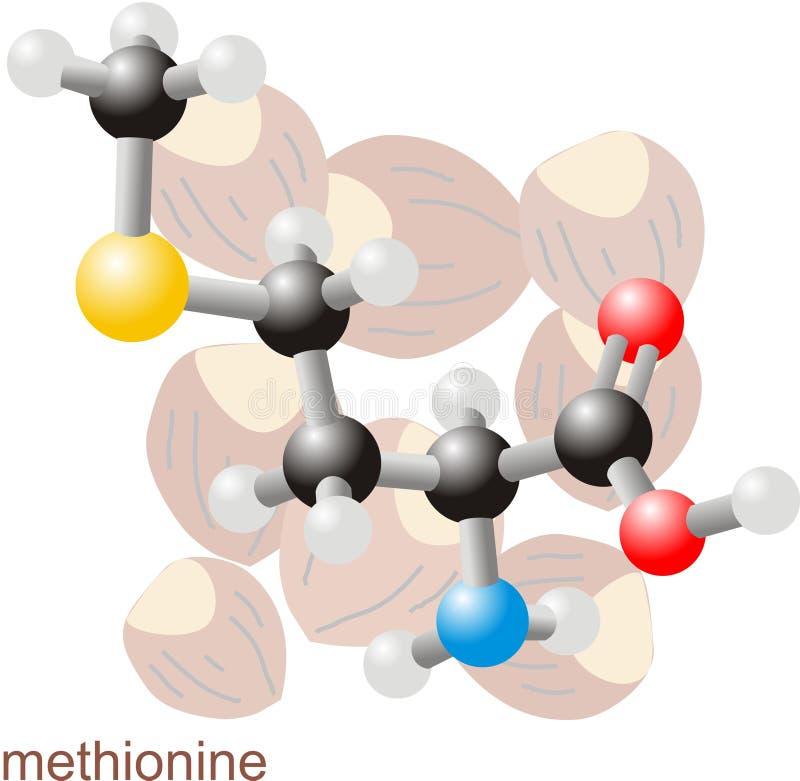 Molécule 2 de méthionine illustration stock