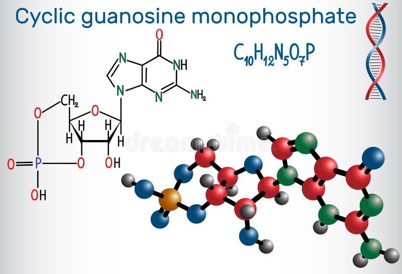 Molécule cyclique de cGMP de monophosphate de guanosine C'est un nucleot illustration libre de droits