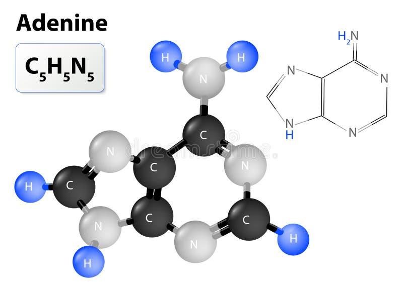 Molécule d'adénine illustration libre de droits