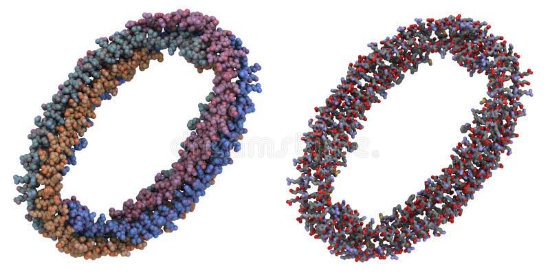Molécule d'Apolipoprotein AI illustration de vecteur