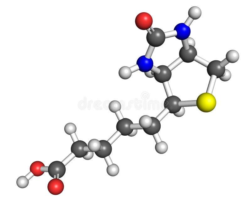 Molécule de la vitamine B7 illustration libre de droits