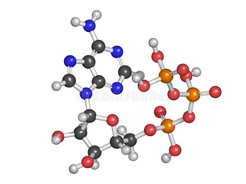 Molécule de transport d'énergie de l'adénosine triphosphate (triphosphate d'adénosine), produit chimique illustration stock