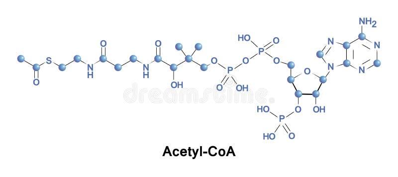 Molécule du coenzyme A d'acétyle illustration stock