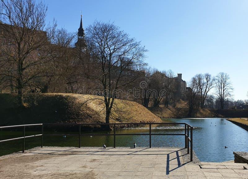 A mola adiantada no céu azul da reflexão da água do parque de Tallinn em patos da árvore de grama verde do lago nada na cidade ve imagens de stock royalty free