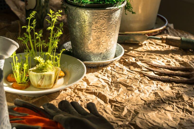 Mola adiantada que planta, transplantando, um ajuste nostálgico rústico imagens de stock royalty free